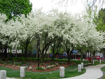 Costa Lopez Taylor Park in full bloom.