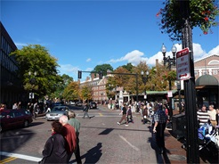 Harvard Square Crosswalk
