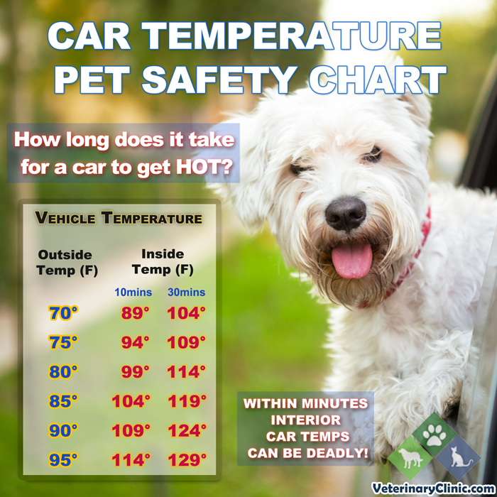 Extreme Heat Safety Tips for Animals