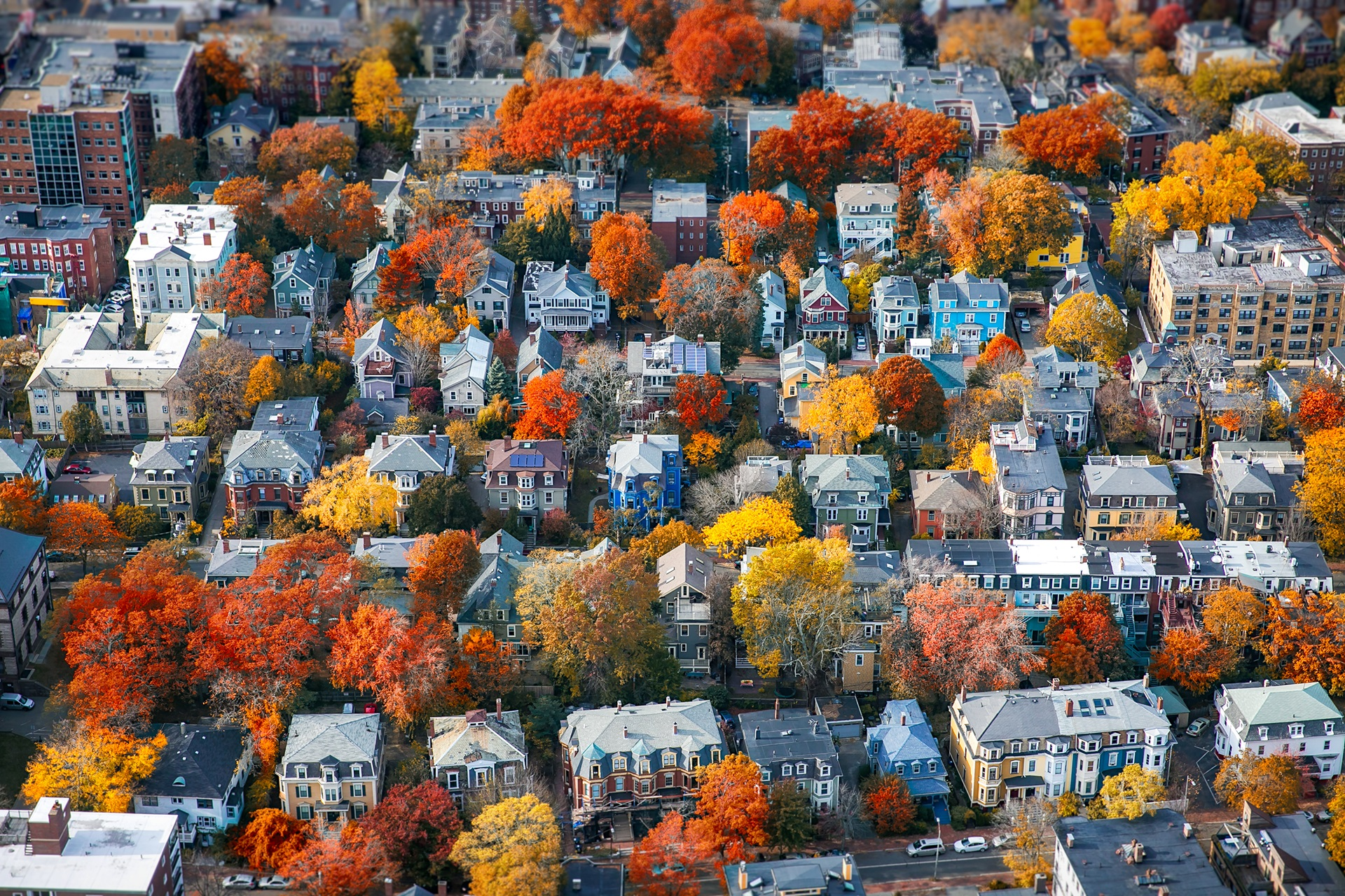 Aerial Photo of Homes and Trees