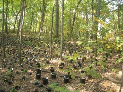 Plantings placed in Lusitania Woods.