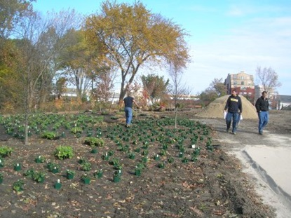 Plantings placed in Maher Park.