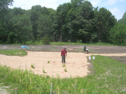 Planting the wet meadow at Lusitania.
