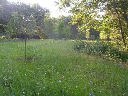 Butterfly Meadow completed.