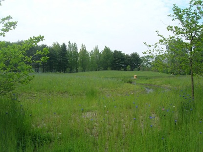 Lusitania Meadow after restoration.