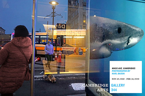 Photo by Karl Baden of People waiting at bush shelter with bus passing by and advertisement on the shelter depicting a shark.