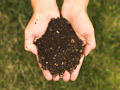 handful of compost