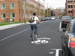 "Biker on Albany Street with Shared Lane ""Sharrow"" markings"