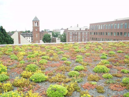 Green Roof at 23 Sidney St, University Park