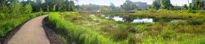 Alewife Wetlands