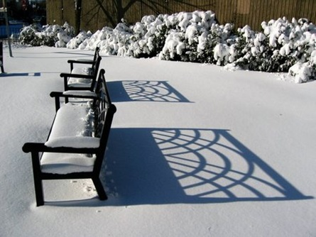 Bench in Snow - Dana Park