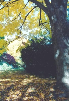 Mount Auburn Cemetery in the Fall