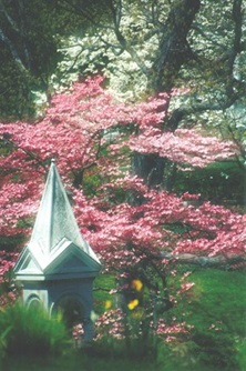 Mount Auburn Cemetery in the Spring - See on back cover of the Resident Information Brochure