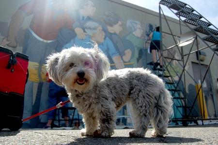Artist Bernard LaCasse's dog stands in front of the mural
