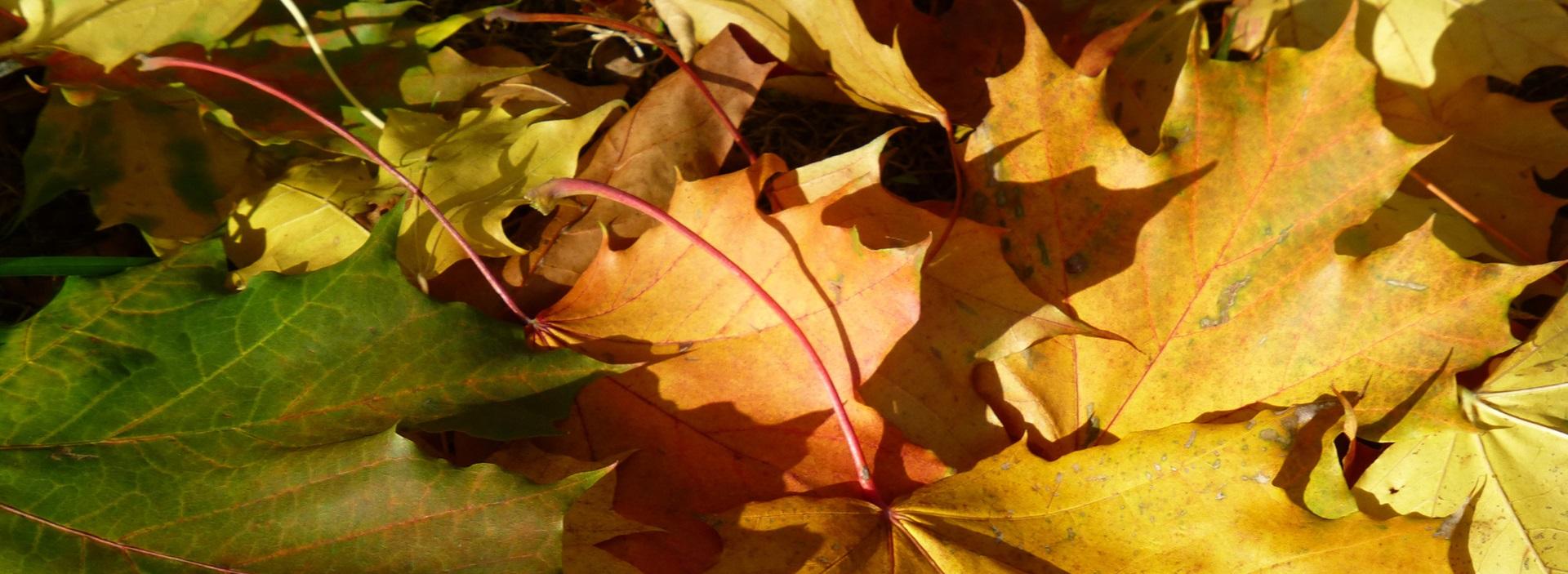 Leaf Blower Permit - City of Cambridge, MA