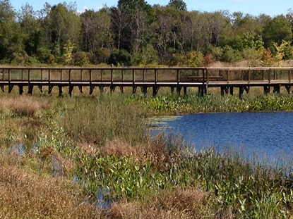 Wetland Basin and Boardwalk3_September 2013