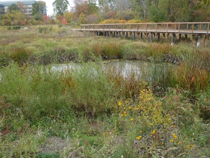 Main Wetland Basin and Boardwalk_October 15 2013
