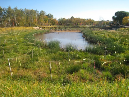 Looking east across the wetland_October 2012